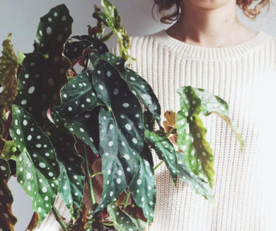 pianta-copertina