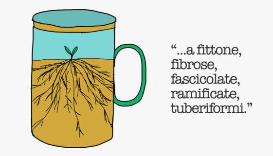 caffe-chiara_RADICI